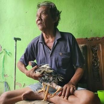 Ayam Berkaki Empat di Bekasi